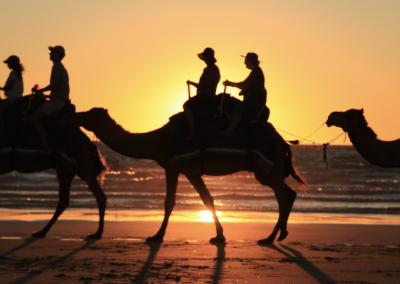 Camel Rides 2