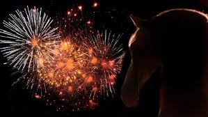 Fireworks with horses head image